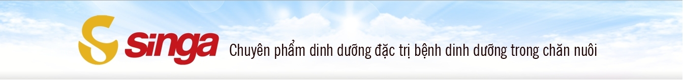 singa.com.vn